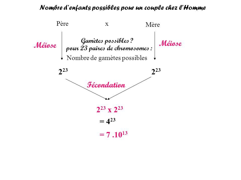 Méiose Méiose 223 223 Fécondation 223 x 223 = 423 = 7 .1013