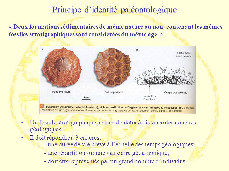 Principe d'identité paléontologique