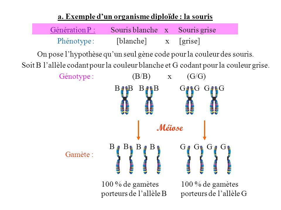Méiose a. Exemple d'un organisme diploïde : la souris Génération P :