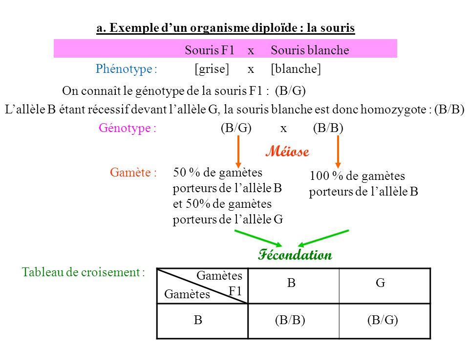 Méiose Fécondation a. Exemple d'un organisme diploïde : la souris