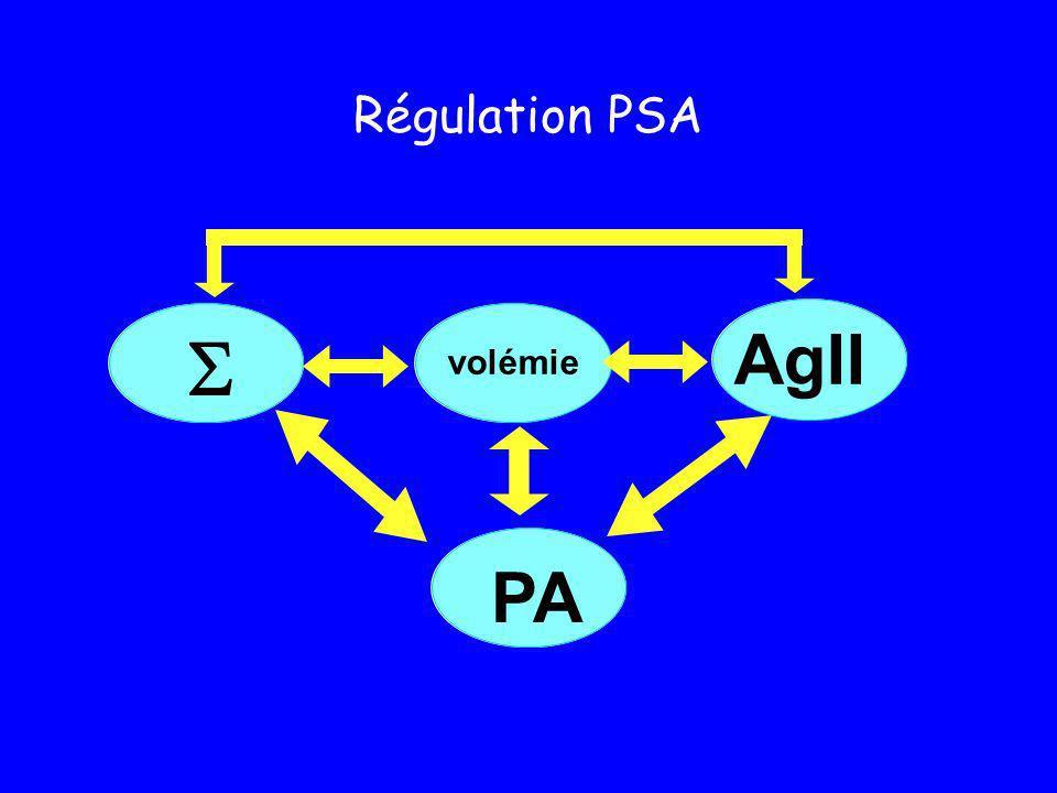  AgII PA Régulation PSA volémie