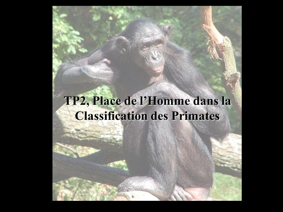 TP2, Place de l'Homme dans la Classification des Primates