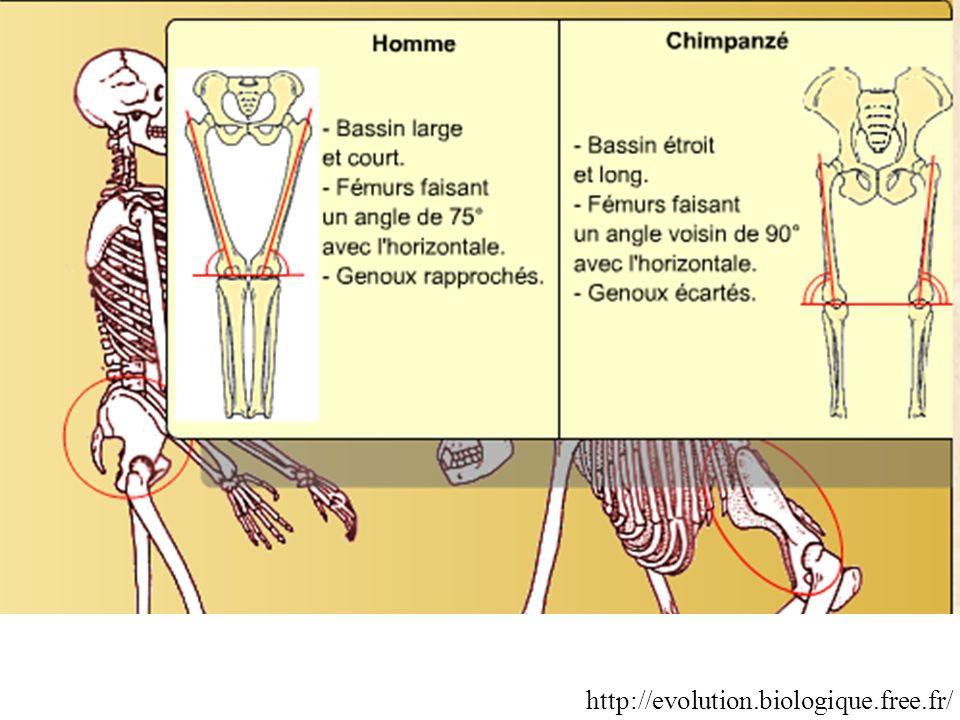 http://evolution.biologique.free.fr/