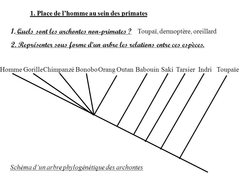 Quels sont les archontes non-primates
