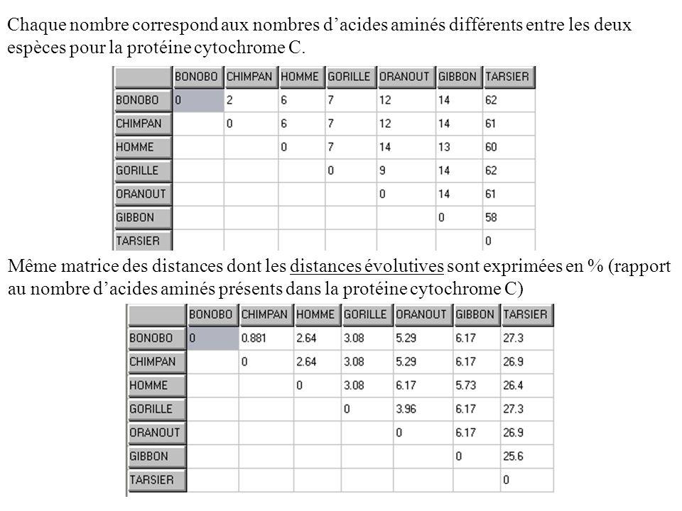 Chaque nombre correspond aux nombres d'acides aminés différents entre les deux espèces pour la protéine cytochrome C.
