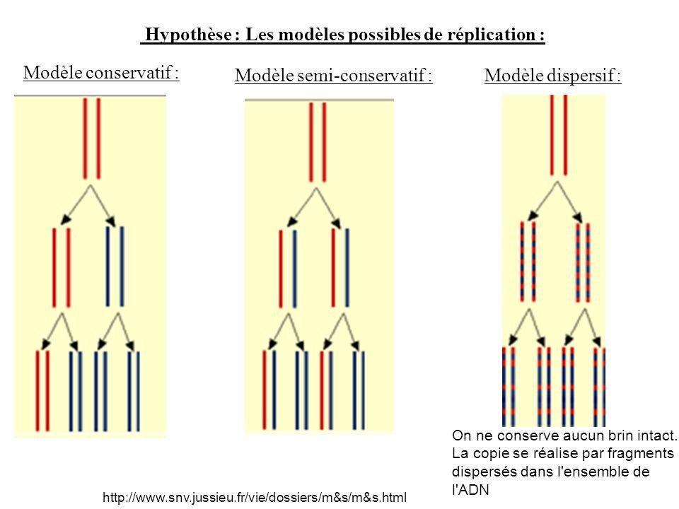 Hypothèse : Les modèles possibles de réplication :