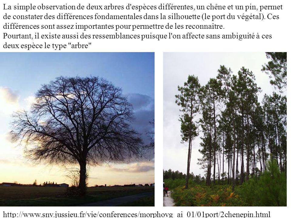 La simple observation de deux arbres d espèces différentes, un chêne et un pin, permet de constater des différences fondamentales dans la silhouette (le port du végétal). Ces différences sont assez importantes pour permettre de les reconnaître.