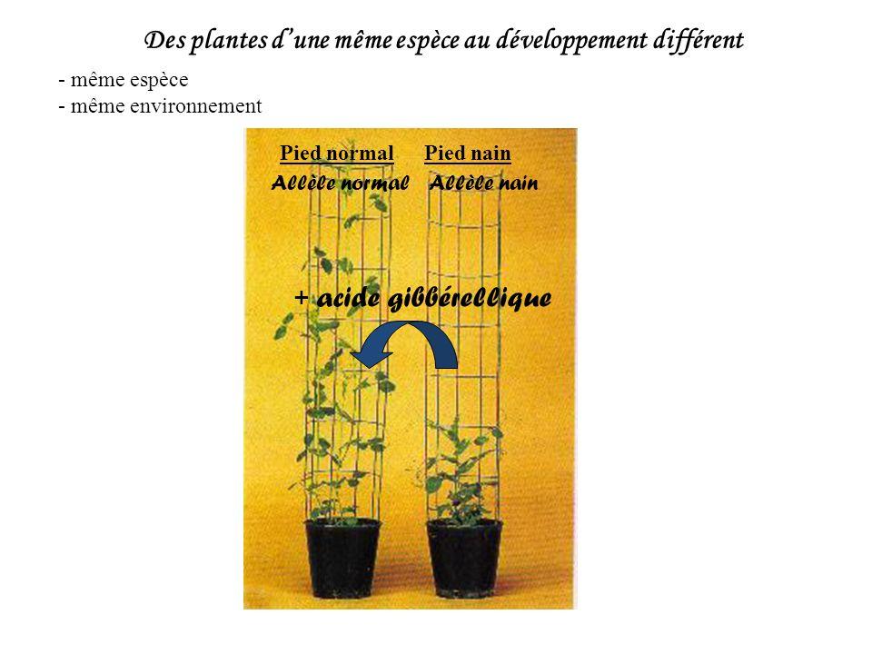 Des plantes d'une même espèce au développement différent