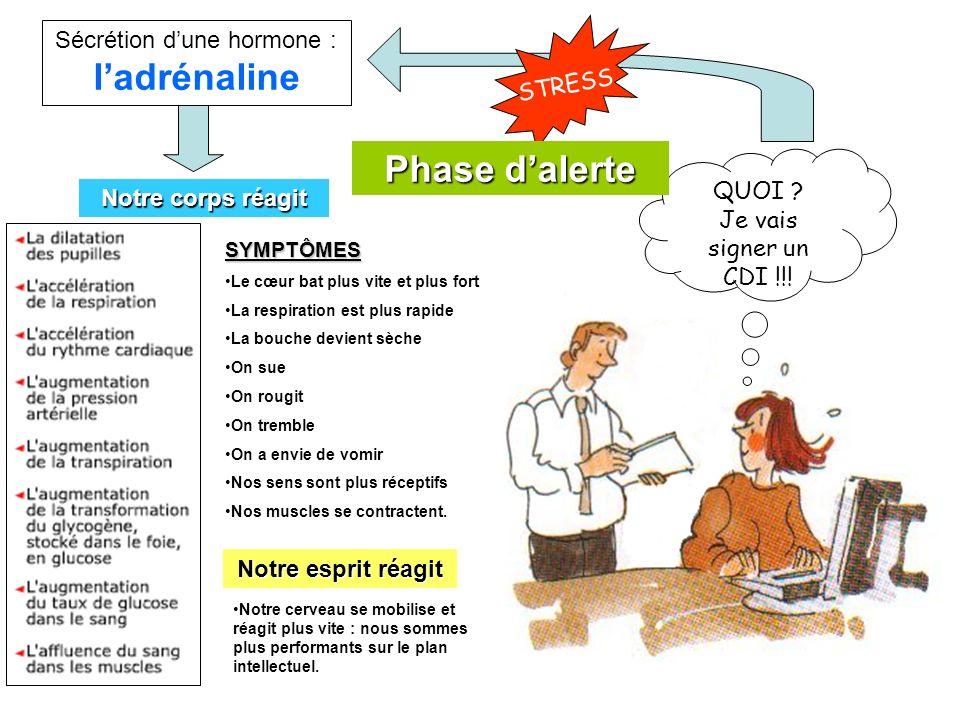 Sécrétion d'une hormone : l'adrénaline