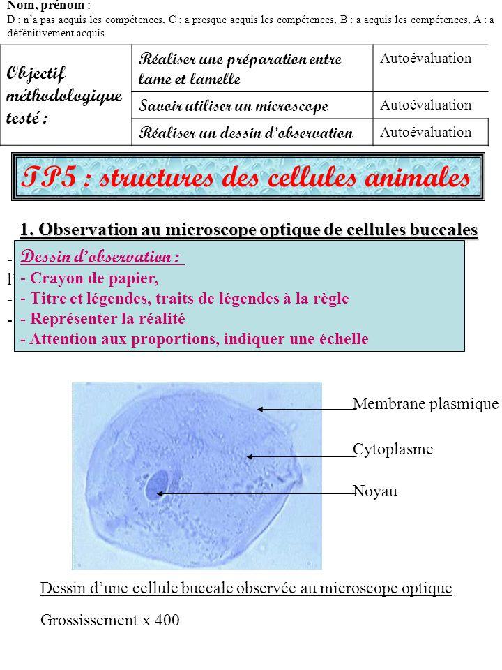 TP5 : structures des cellules animales