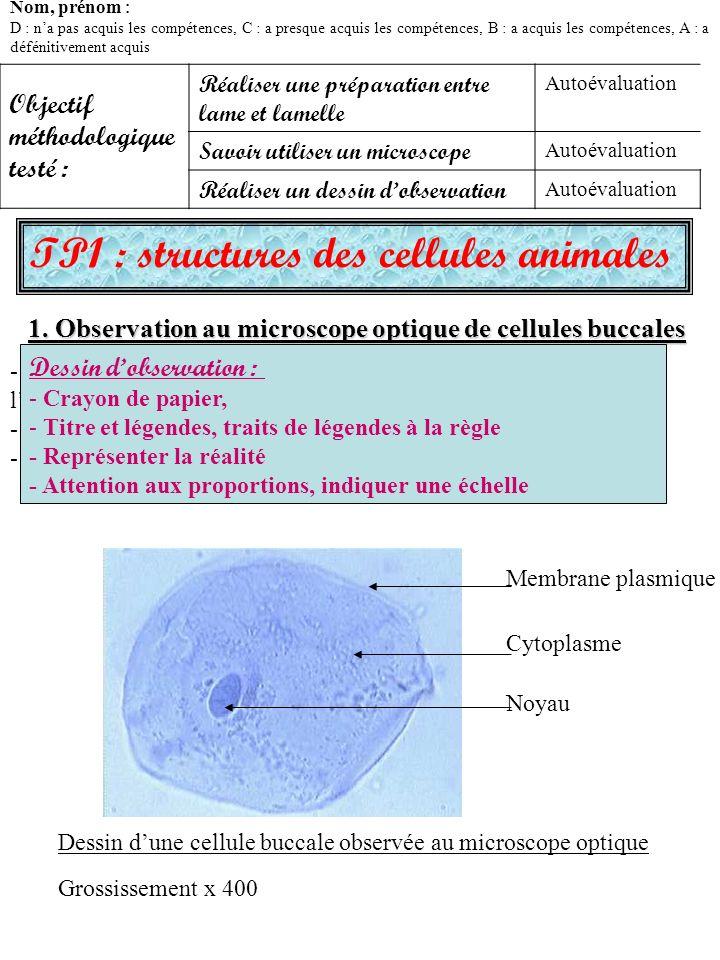 TP1 : structures des cellules animales