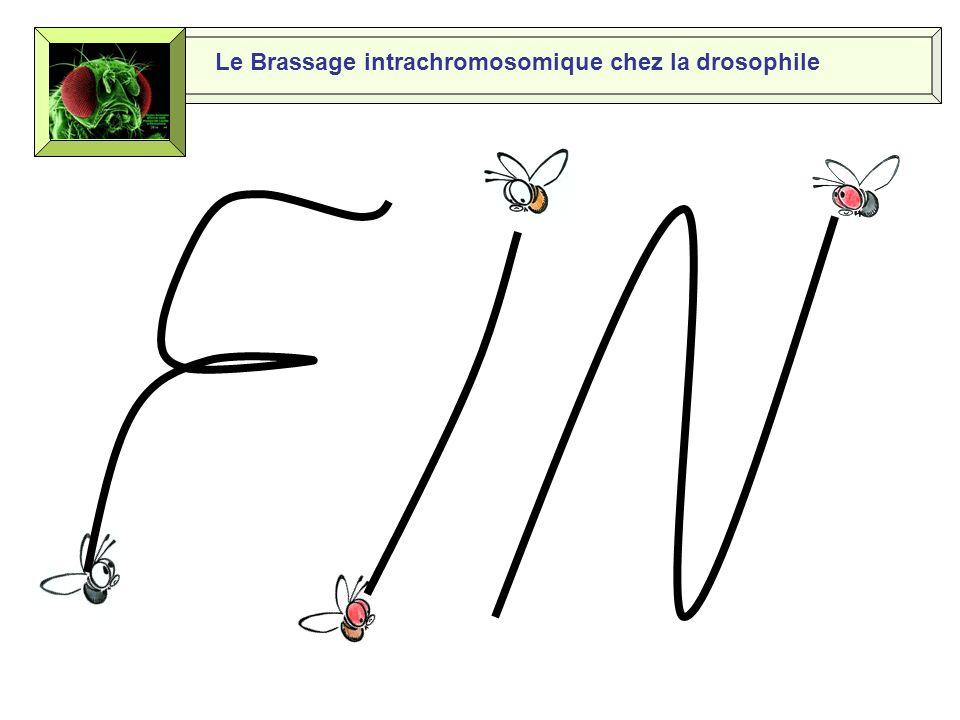 Le Brassage intrachromosomique chez la drosophile