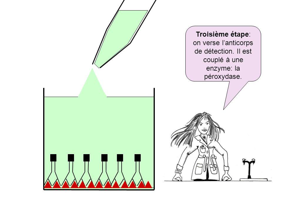 Troisième étape: on verse l'anticorps de détection