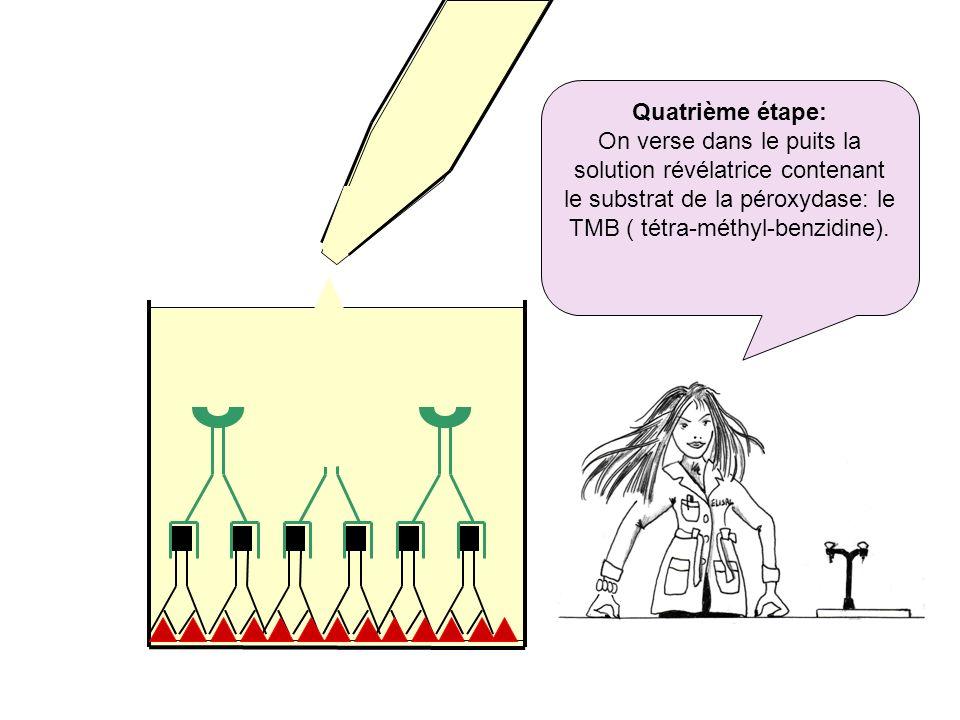 Quatrième étape: On verse dans le puits la solution révélatrice contenant le substrat de la péroxydase: le TMB ( tétra-méthyl-benzidine).