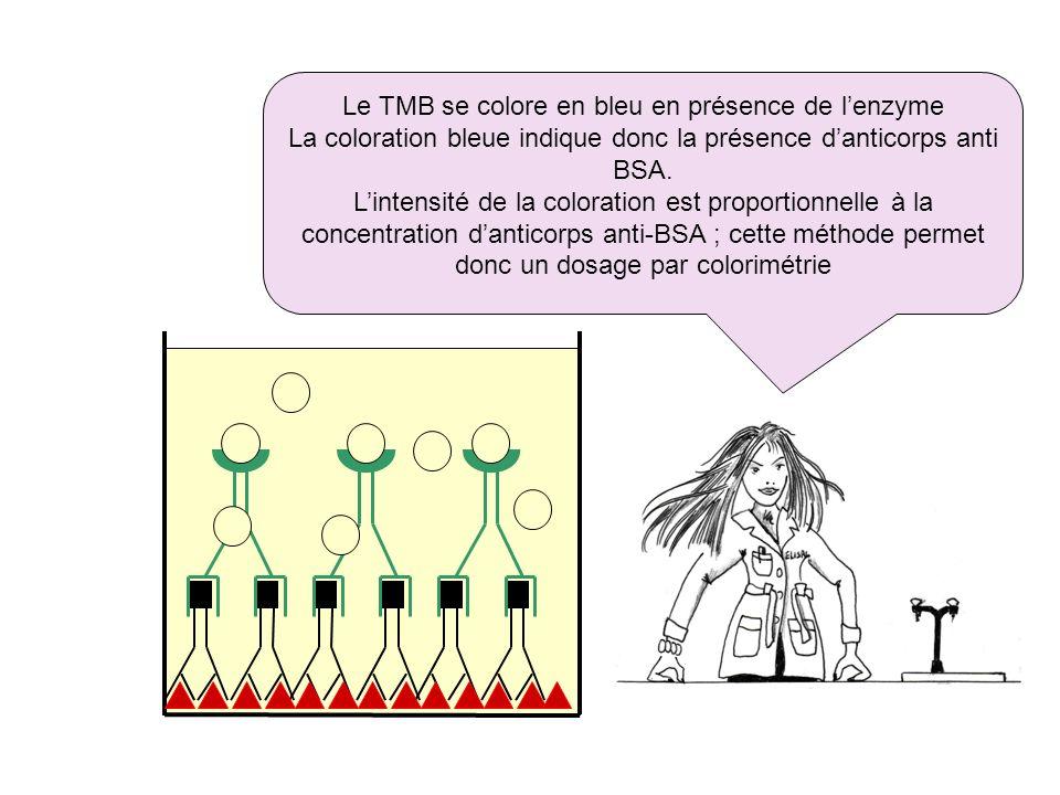 Le TMB se colore en bleu en présence de l'enzyme