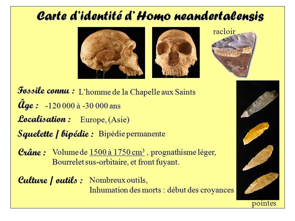 Carte d'identité d' Homo neandertalensis