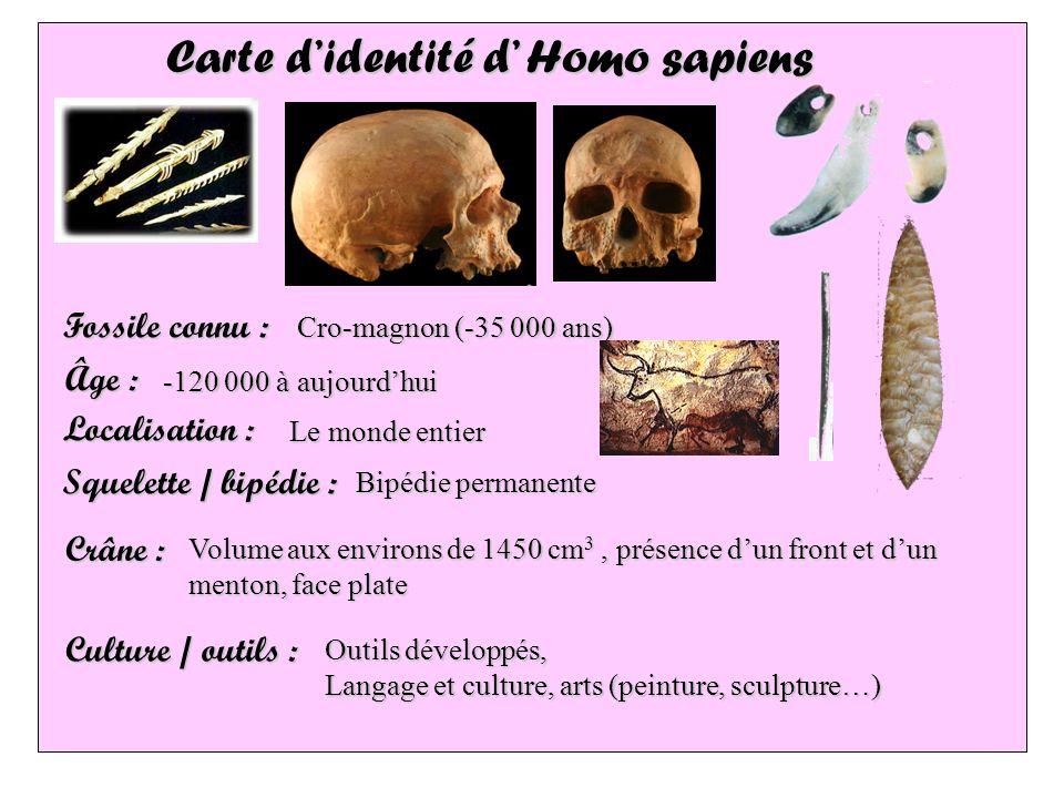 Carte d'identité d' Homo sapiens