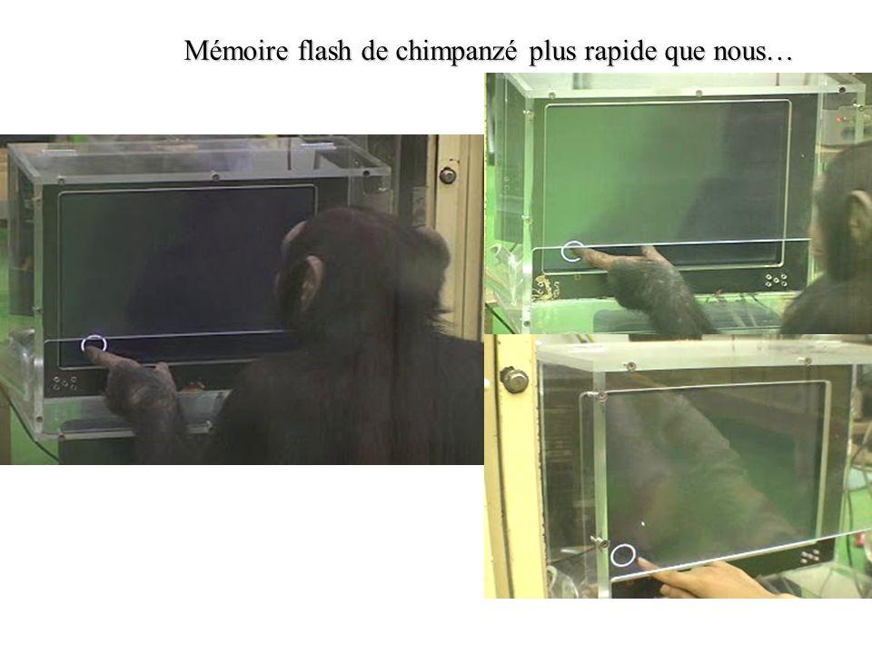 Mémoire flash de chimpanzé plus rapide que nous…