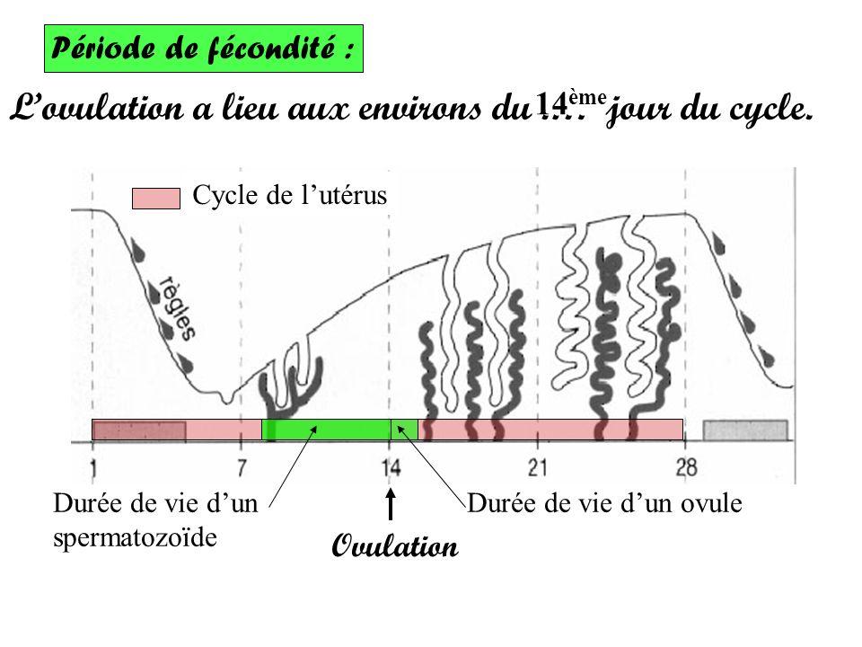L'ovulation a lieu aux environs du .… jour du cycle.