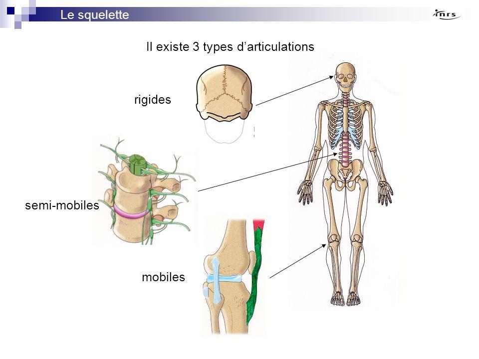 Le squelette Il existe 3 types d'articulations rigides semi-mobiles mobiles