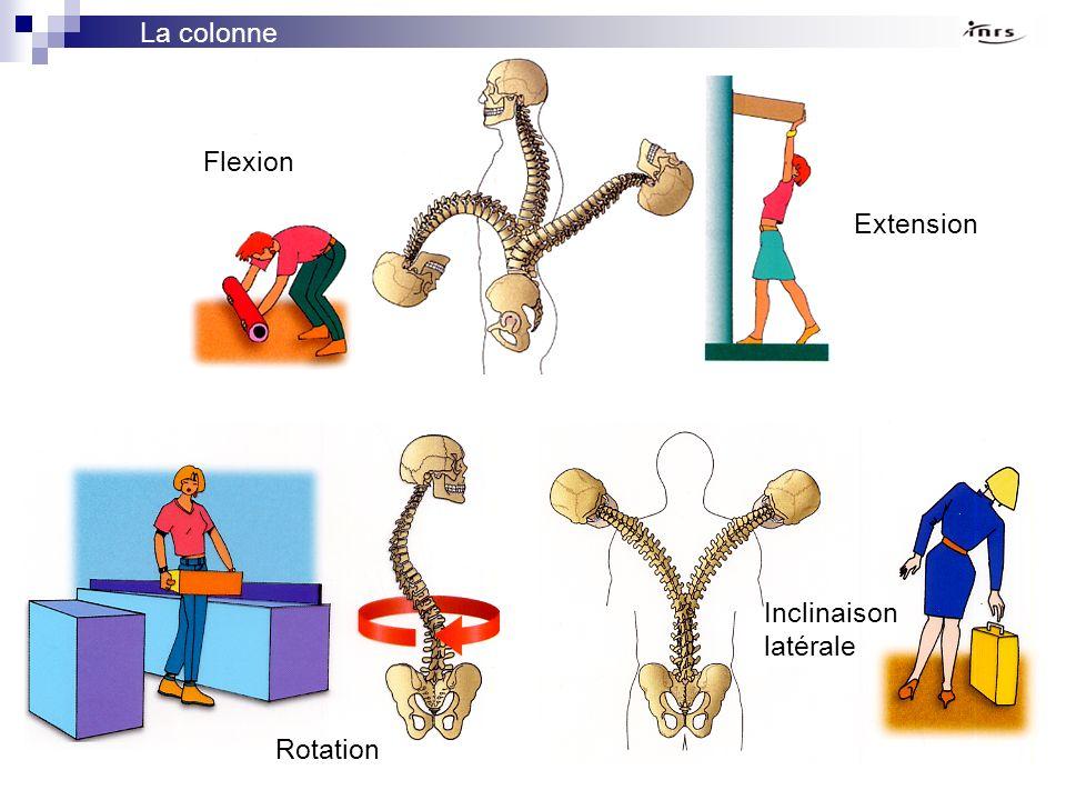 La colonne vertébrale Flexion Extension Inclinaison latérale Rotation