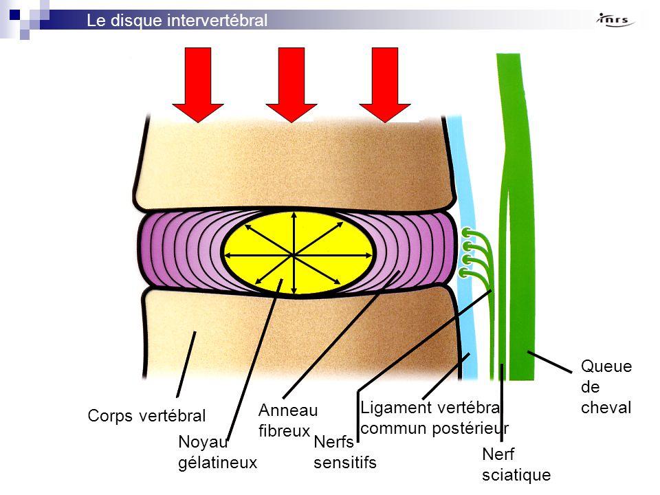 Le disque intervertébral