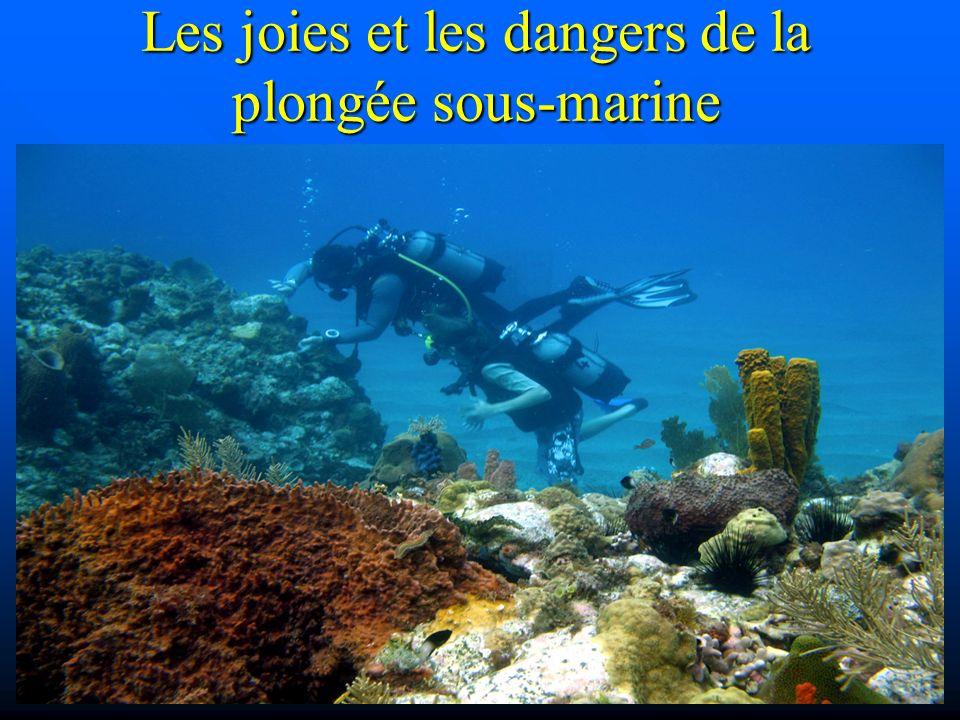 Les joies et les dangers de la plongée sous-marine