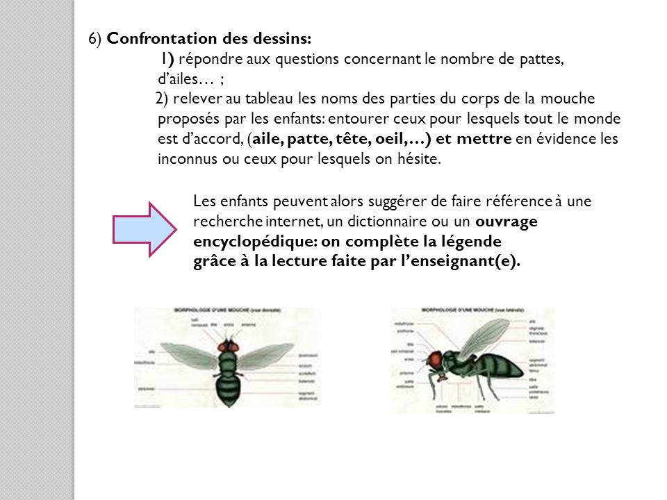 6) Confrontation des dessins:
