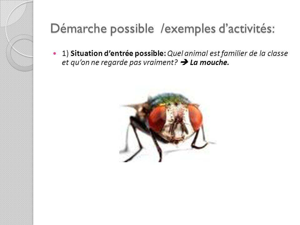 Démarche possible /exemples d'activités: