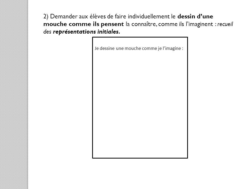 2) Demander aux élèves de faire individuellement le dessin d'une mouche comme ils pensent la connaître, comme ils l'imaginent : recueil des représentations initiales.