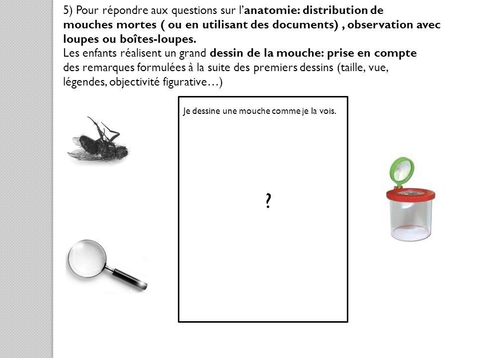 5) Pour répondre aux questions sur l'anatomie: distribution de