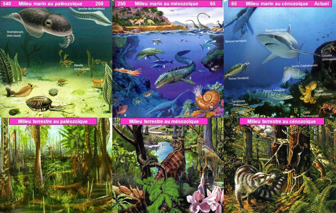 540 Milieu marin au paléozoïque 250 250 Milieu marin au mésozoïque 65