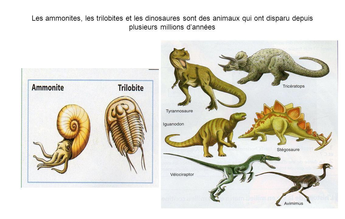 Les ammonites, les trilobites et les dinosaures sont des animaux qui ont disparu depuis plusieurs millions d'années