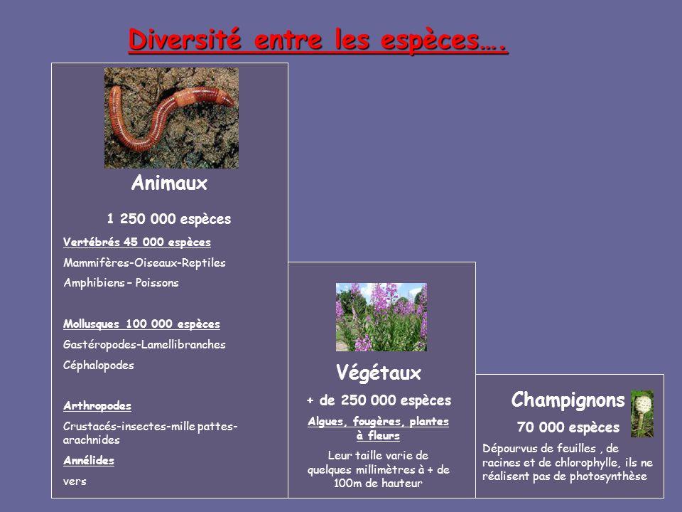 Algues, fougères, plantes à fleurs