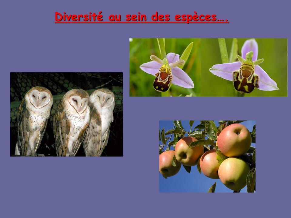 Diversité au sein des espèces….