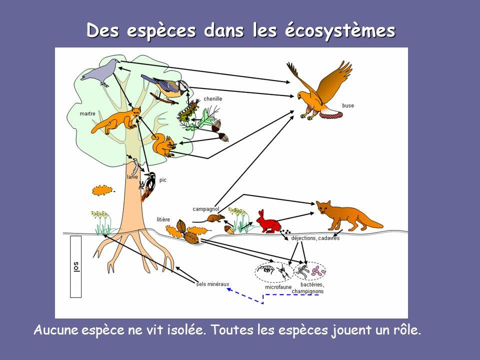 Des espèces dans les écosystèmes