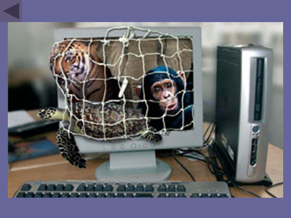 Le commerce international d'espèces sauvages concerne des centaines de millions de plantes et d'animaux.