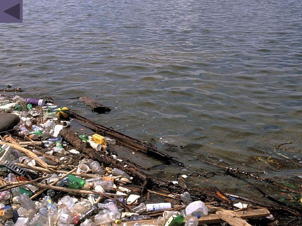 Les produits chimiques empoisonnent directement de nombreuses espèces ou favorisent l'eutrophisation qui finit par asphyxier les poissons.