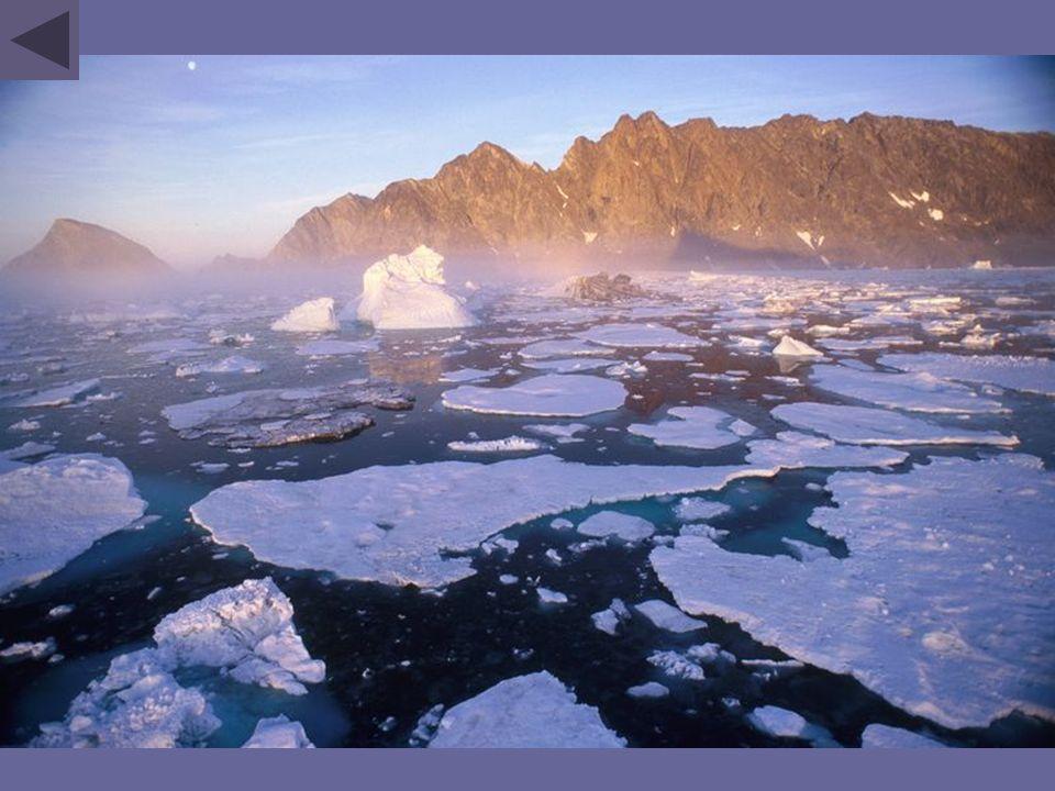 Le réchauffement climatique pourrait devenir la principale menace sur les espèces.