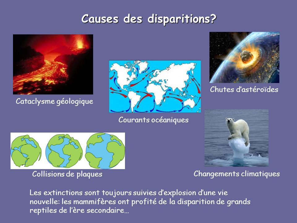 Causes des disparitions