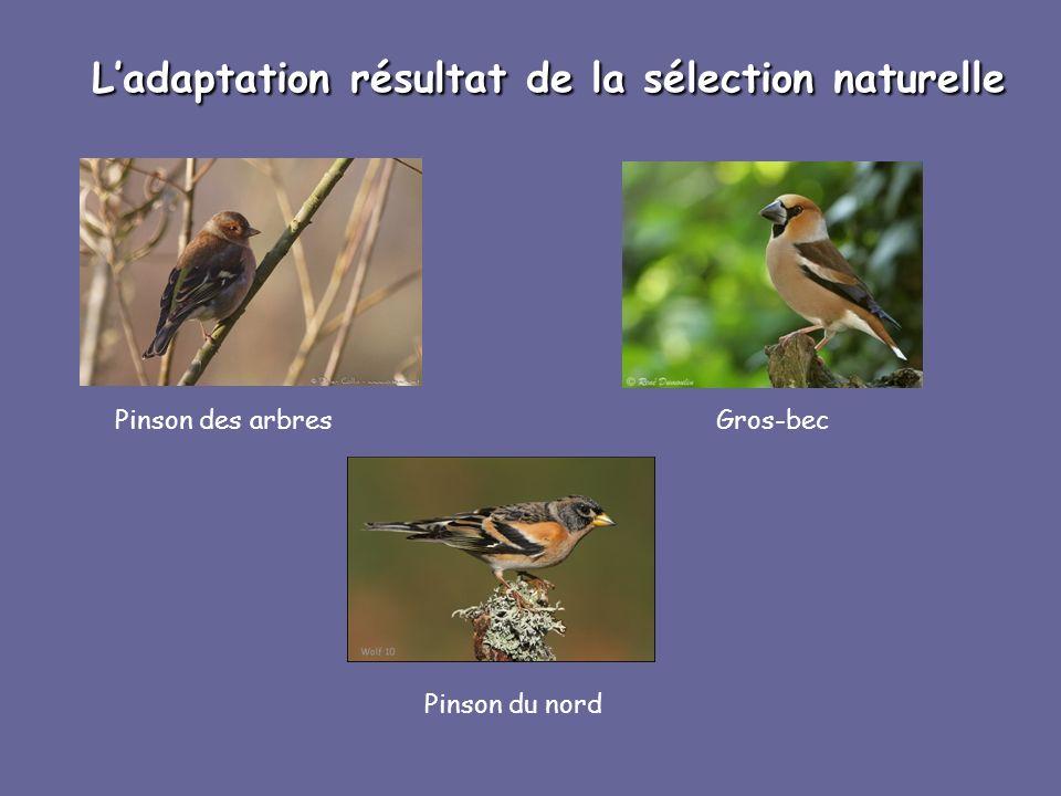 L'adaptation résultat de la sélection naturelle