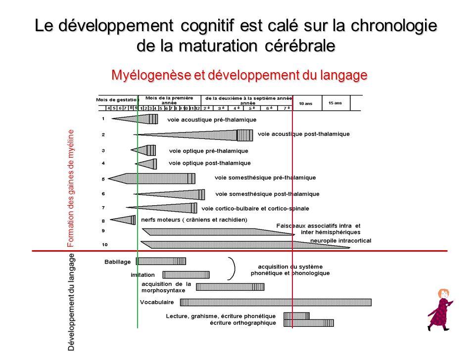 Le développement cognitif est calé sur la chronologie de la maturation cérébrale