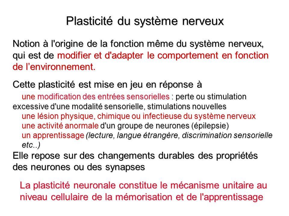 Plasticité du système nerveux
