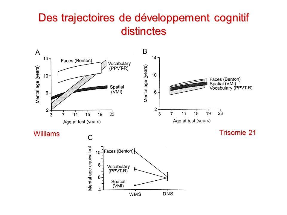 Des trajectoires de développement cognitif distinctes