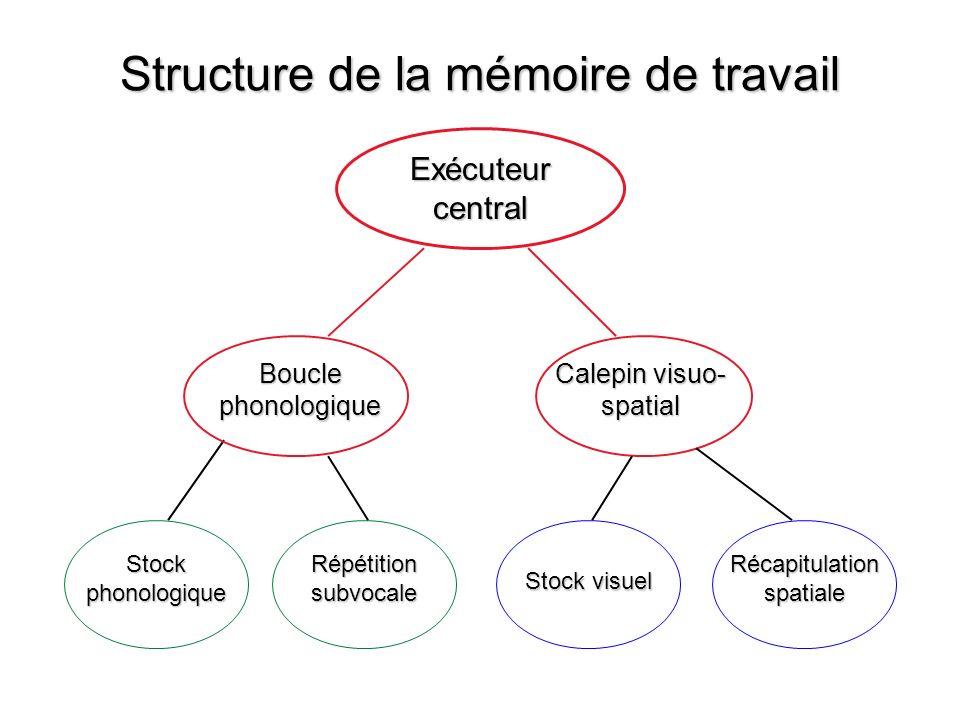 Structure de la mémoire de travail