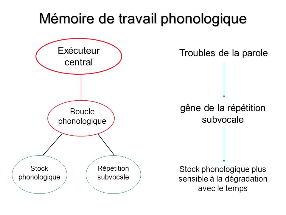 Mémoire de travail phonologique
