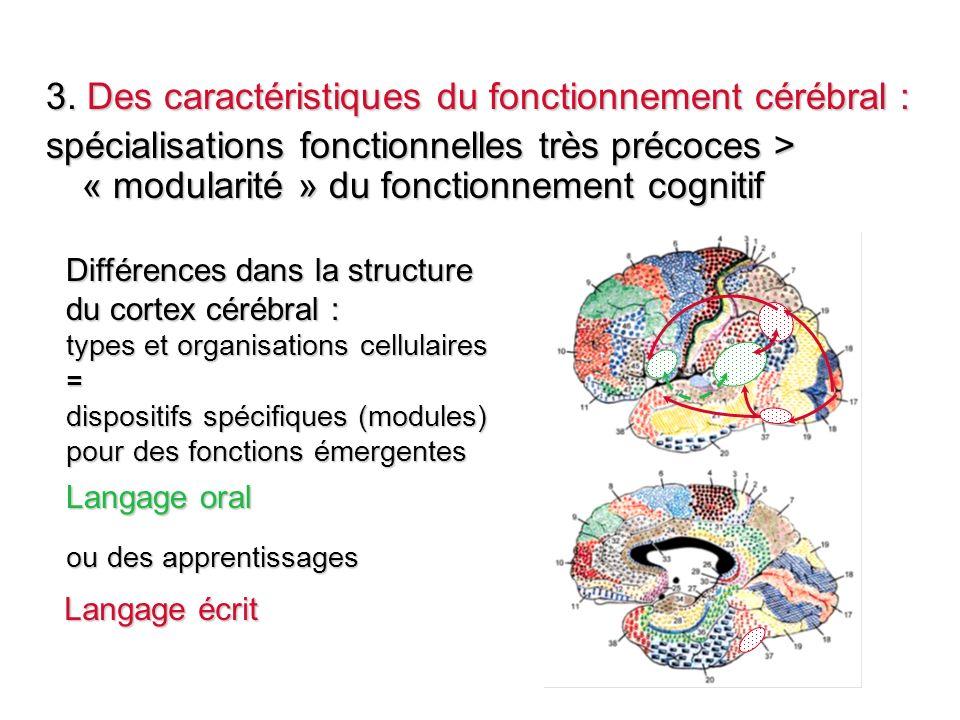 3. Des caractéristiques du fonctionnement cérébral :