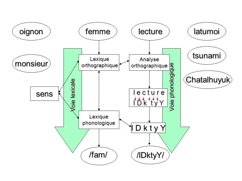 oignon sens femme /fam/ l D k t y Y lecture /lDktyY/ latumoi tsunami