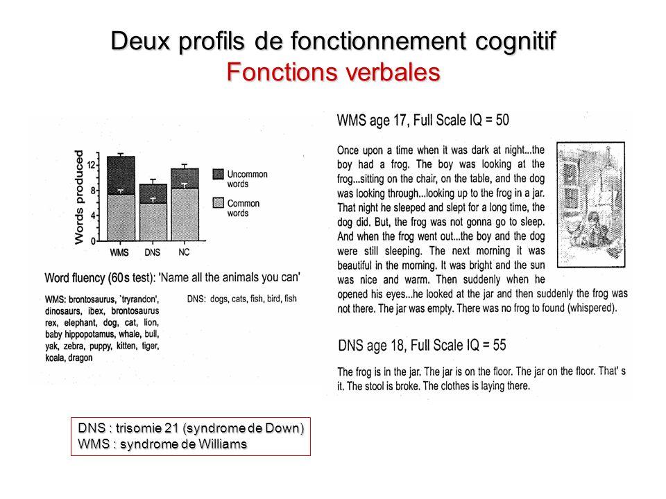 Deux profils de fonctionnement cognitif Fonctions verbales