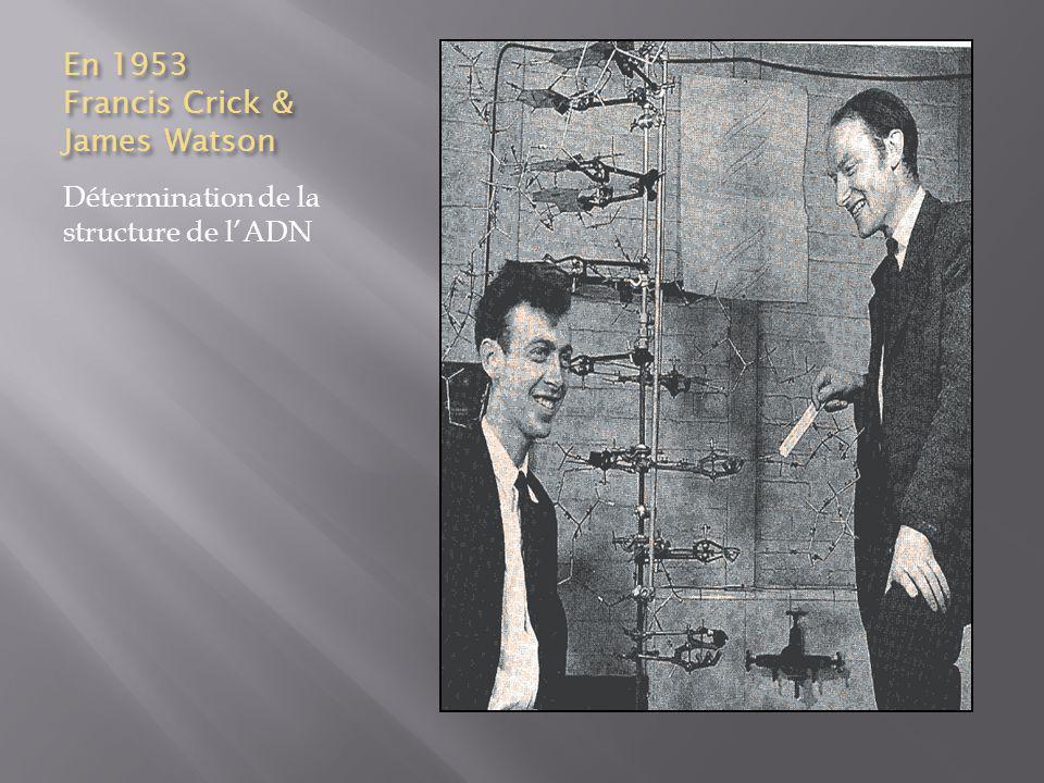 En 1953 Francis Crick & James Watson